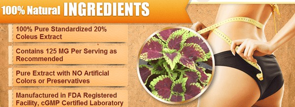 Forskolin Fuel Ingredients - Forskolin Extract