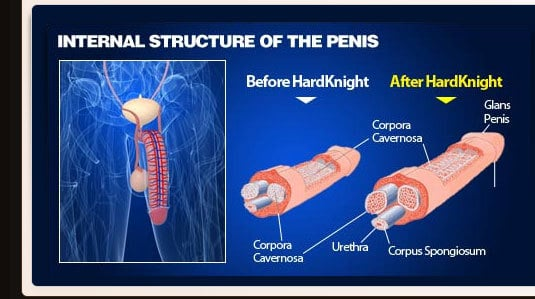Hard Kinght - Internal Structure